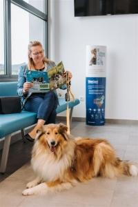 Tačka, veterina, trgovina, bolnica - prelep v Šentjurski čakalnici