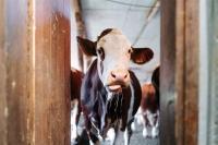 Tačka, veterina, bolnica in trgovina - prijazna krava