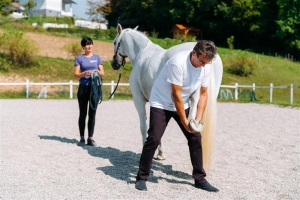 Tačka, veterina, trgovina, delo veterinarja s konji na terenu