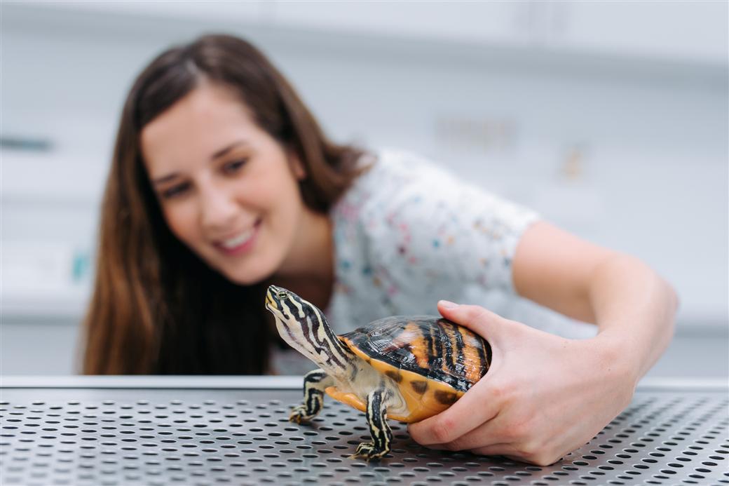 Tačka, Veterinary Clinic and Store - friendly turtle
