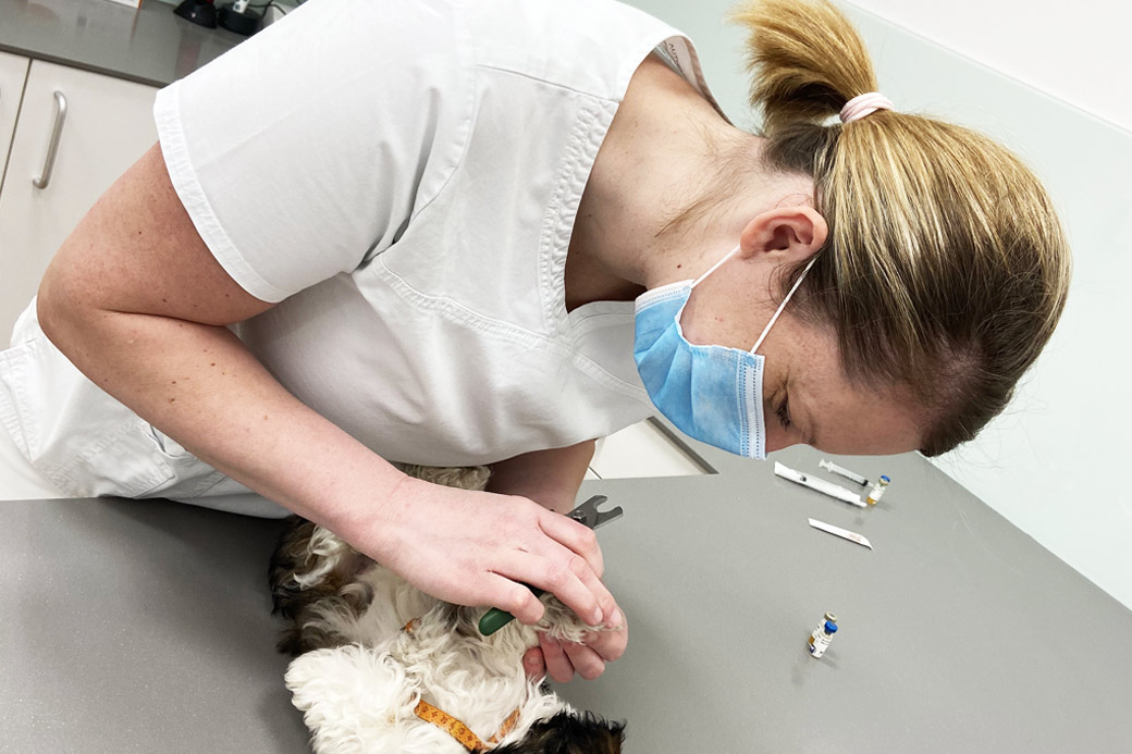 Tačka veterina Celje, oskrbitev kužka